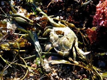 Dead Crab, Margaretsville