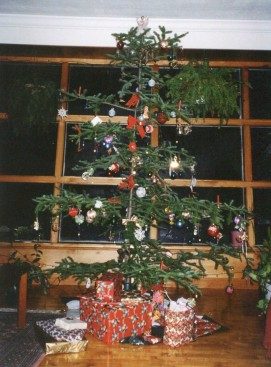 A typical Hare/Charlie Brown Christmas Tree